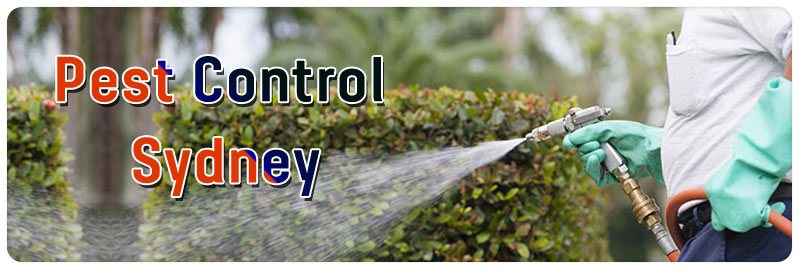 Professional Pest Control Services in Blackett