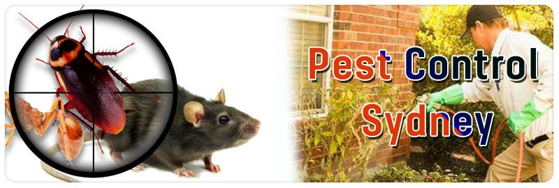 Pest Control Blue Bay