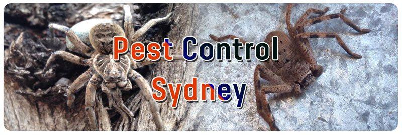 Expert Pest Control The Rocks