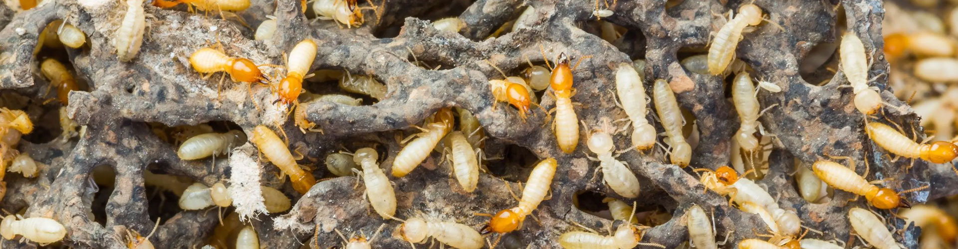 Tired of DIYs? Get Professional Pest Control Services.