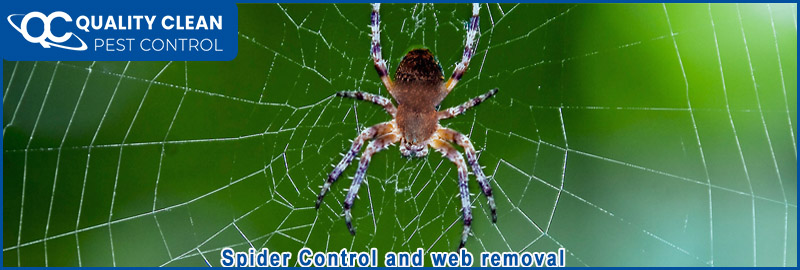 Spider Pest Control and Web Removal