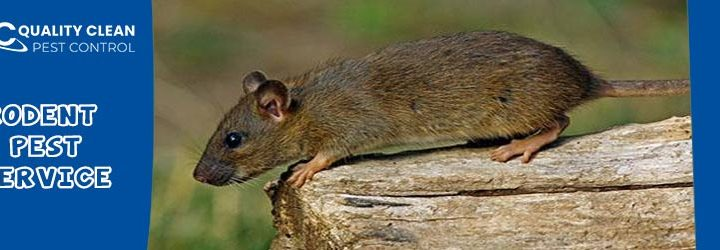 DIY Home Remedies for Pest Control
