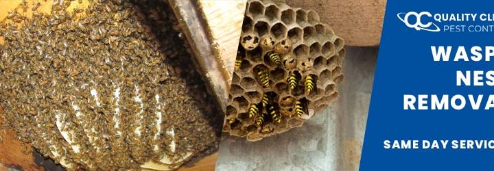 Ways for Safe Wasp Nest Removal